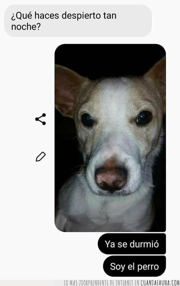 chat,conversación,perro,teléfono