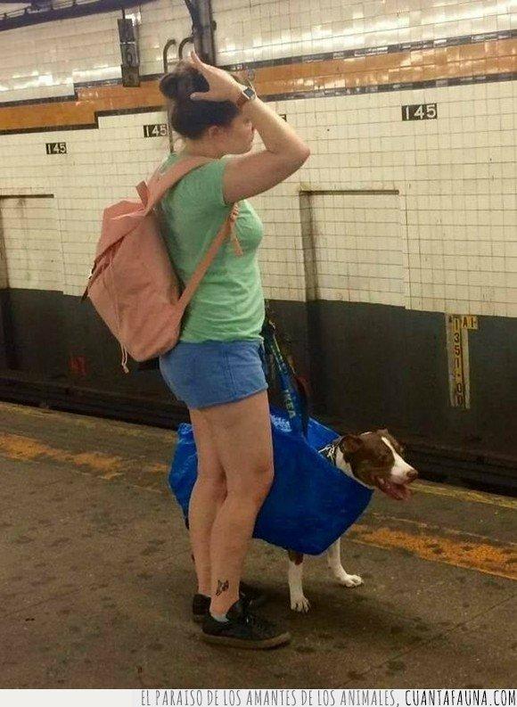 bolsa,metro,nyc,perros,subway