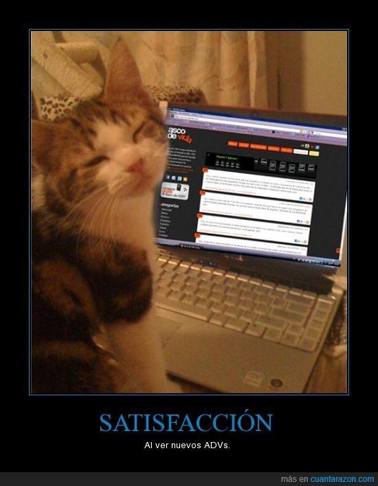 adv,gato,satisfaccion