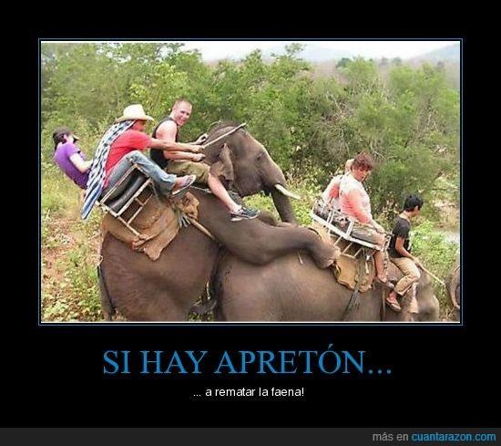 africa,apreton,elefante