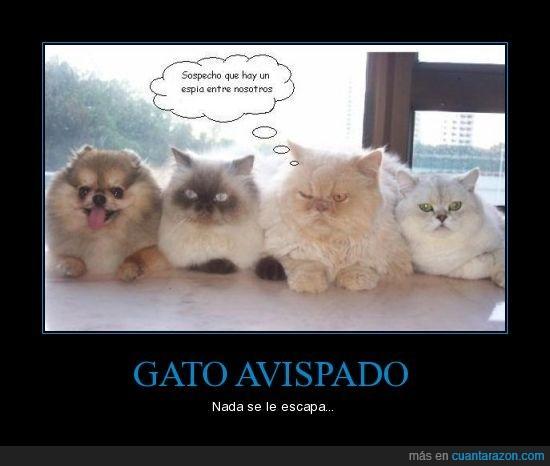 gato,intruso,perro