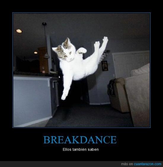 breakdance,gato,gatos,gravedad