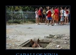 Enlace a CABALLOS NINJA