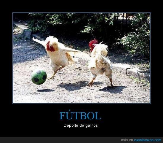 deporte,fútbol,gallitos