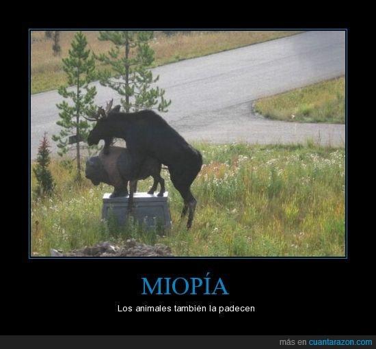 animales,miopía