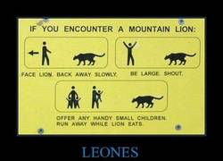 Enlace a LEONES