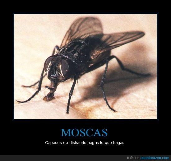 distracción,distraer,moscas