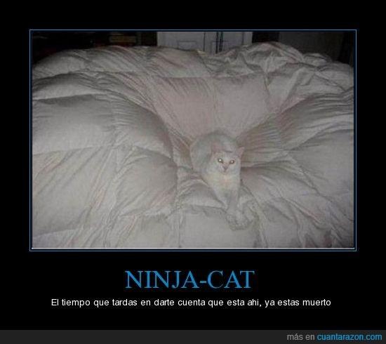 blanco,gato,ninja