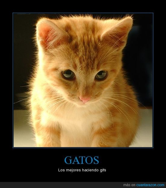 gato,gif,mejores