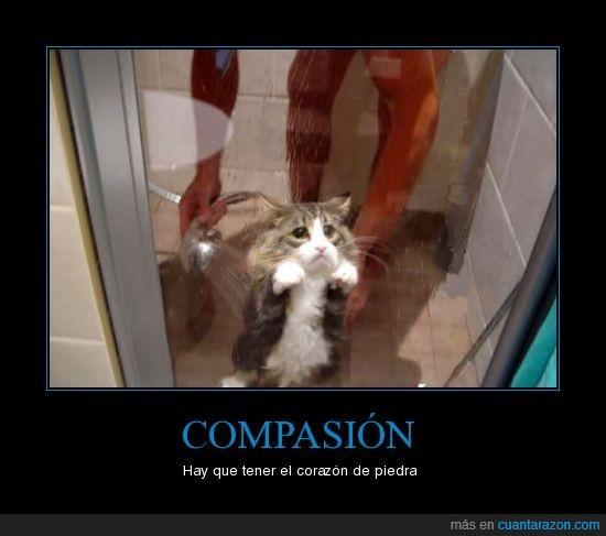 animales,compasión,ducha,Gato