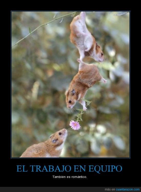 hamsters,romántico,trabajo en equipo