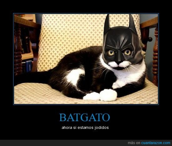 batgato,batman,gato