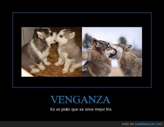 lobo,lobos,venganza