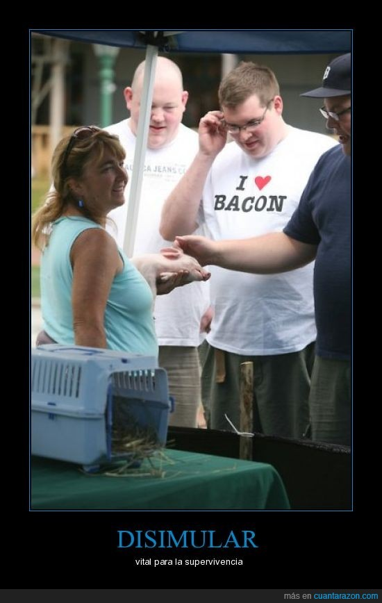 bacon,cerdo,godo