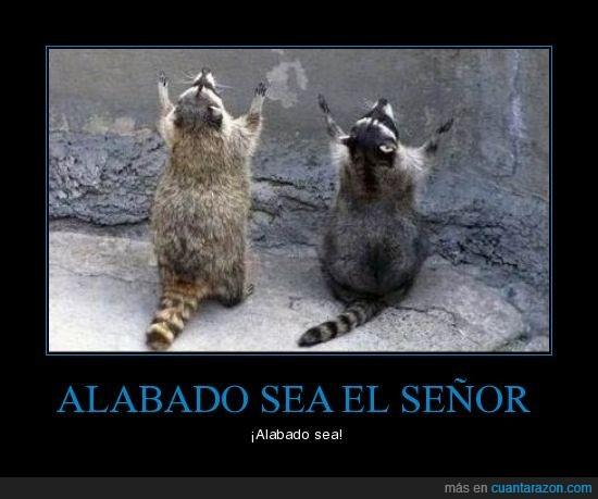 alabar,dios,lord,mapache,señor,xD