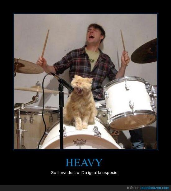 gato,heavy,rock