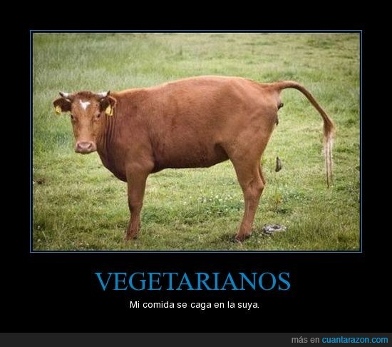 carne,carnívoro,vaca,vegetarianos