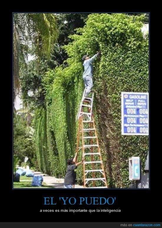 arbustos,inteligencia,jardinero,poder