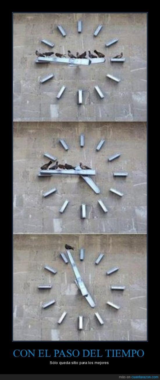 palomas,paso del tiempo