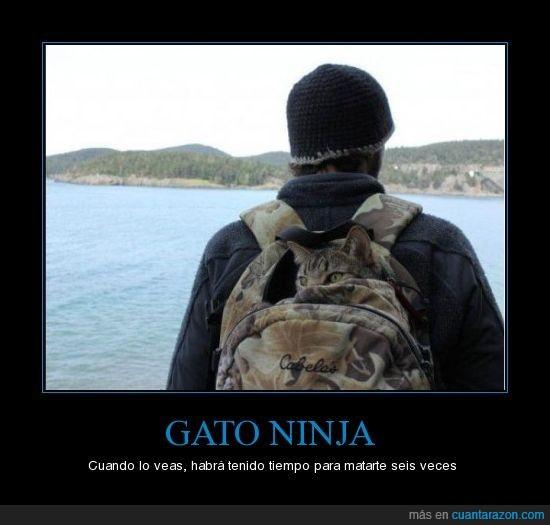 gato,ninja