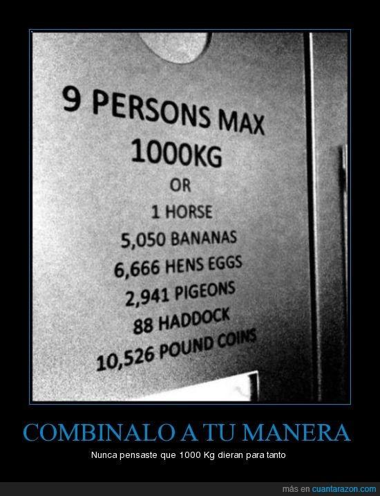 animal,ascensor,quilos,risa
