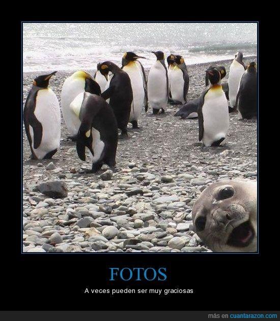 feliz,foca,pingüinos