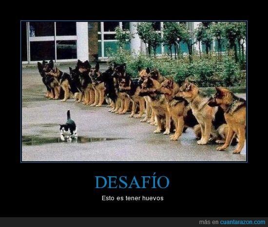 gato,perros,valiente