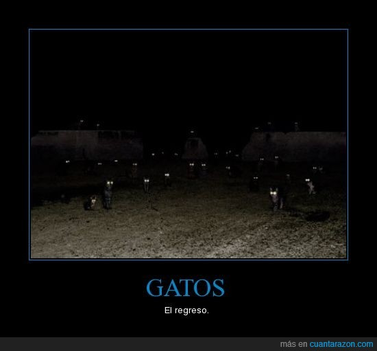 gatos,LOL
