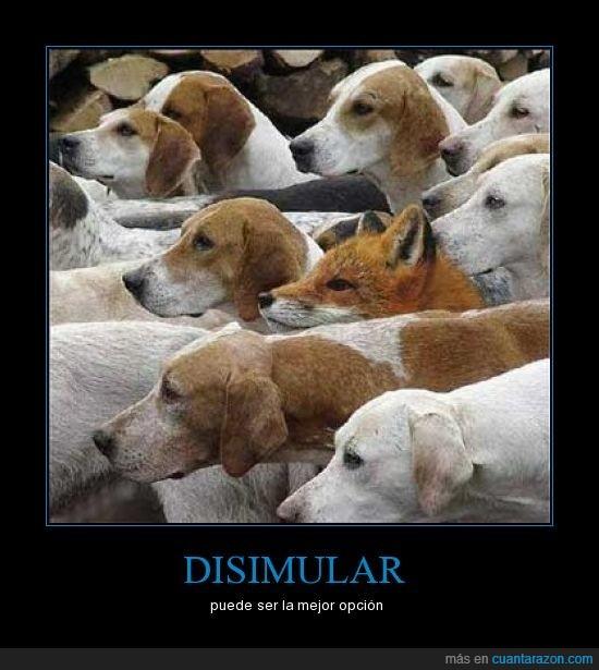 disimular,perros,zorro