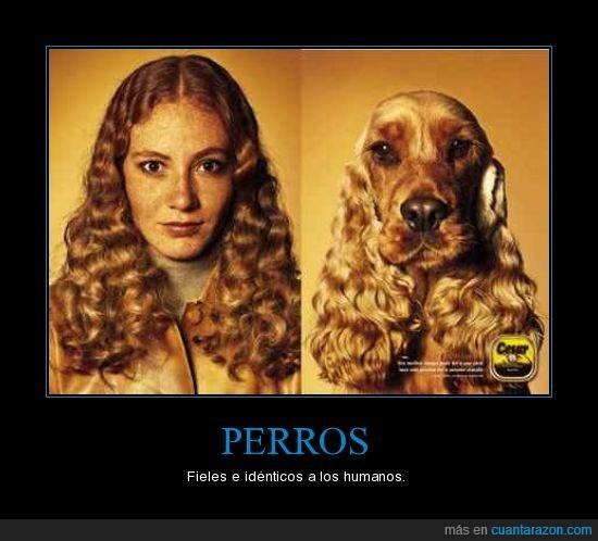 HUmanos,Perros