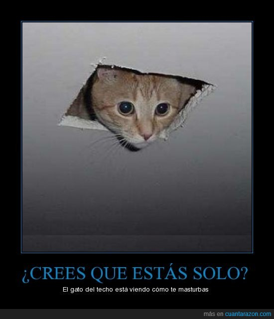 agujero,ceiling cat,gato,techo