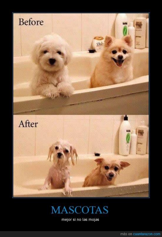 ducha,mascotas
