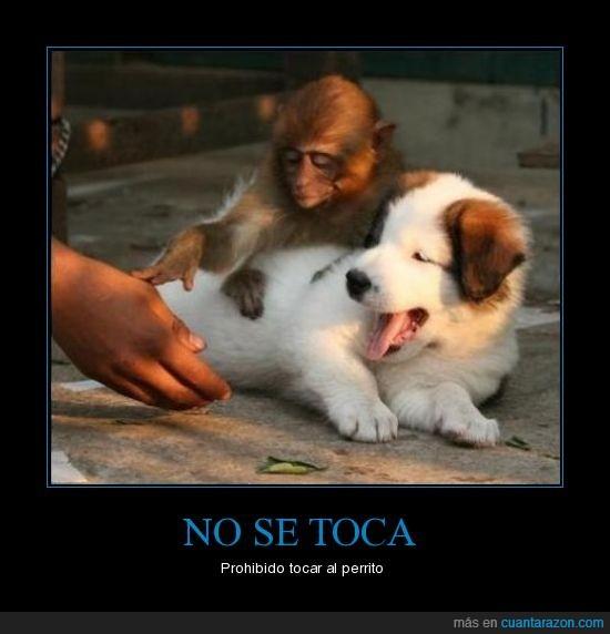mono,perro,tocar