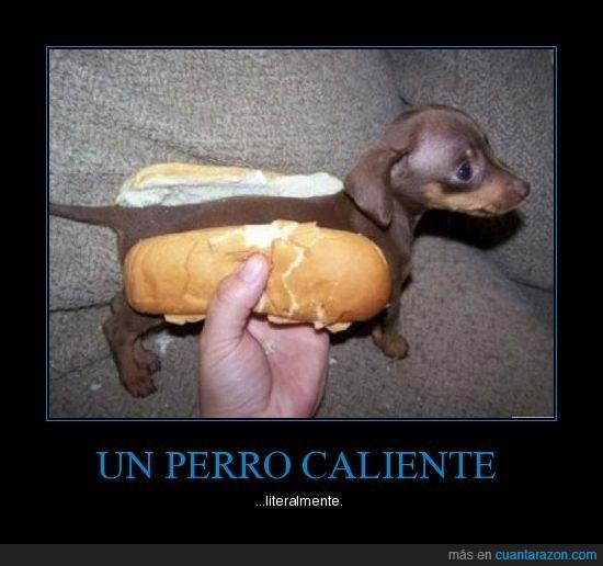 hot dog,perro