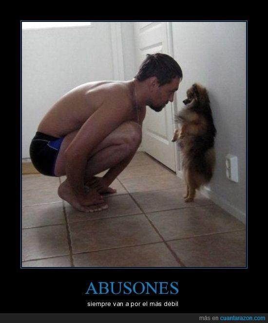 abusón,perro