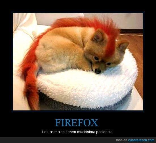 Firefox,Paciencia,Tinte