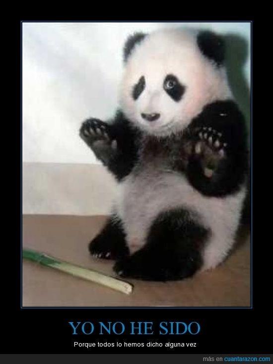 panda,yo no he sido