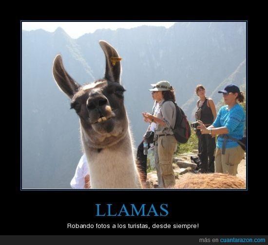 foto,llama,owned