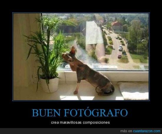 fail,fotografos,gato
