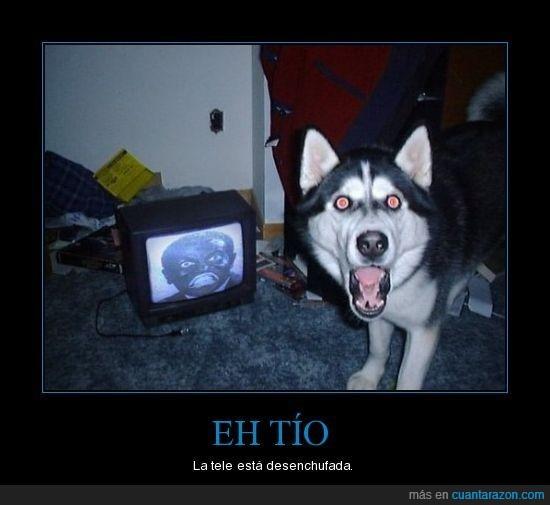 perro,tele