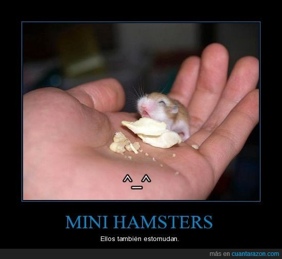 estornudo,mini hamster