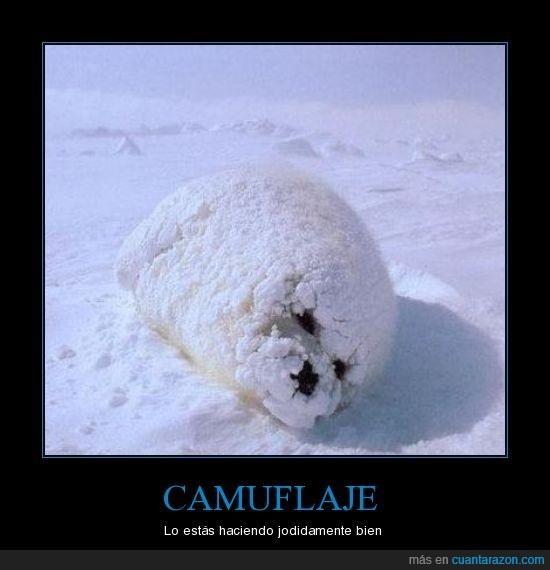 camuflaje,epic win,foca,nieve