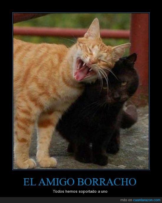 amigos,borracho,gatos