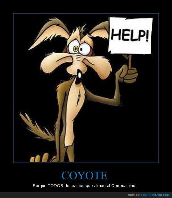 correcaminos,coyote