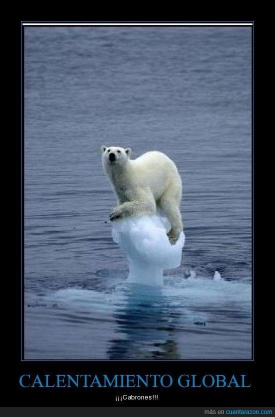 calentamiento global,oso polar