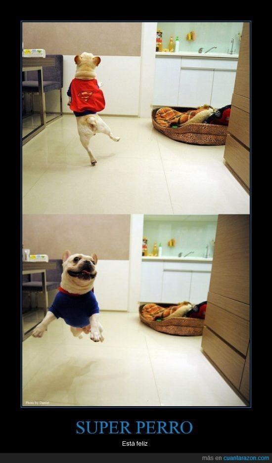 feliz,perro