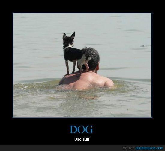 espalda,mar,perro,playa,surfear