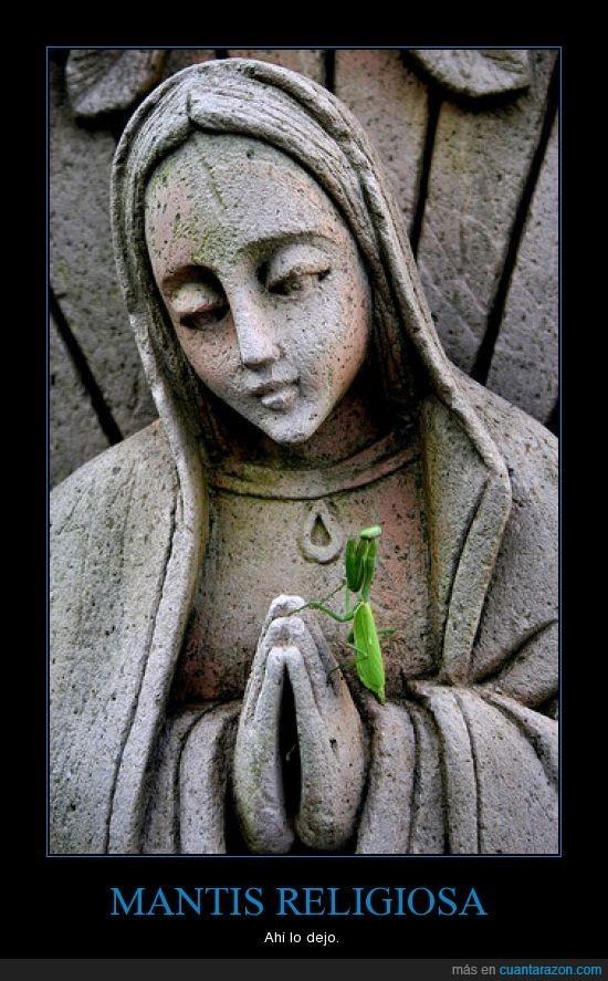 Dios,Mantis,religiosa