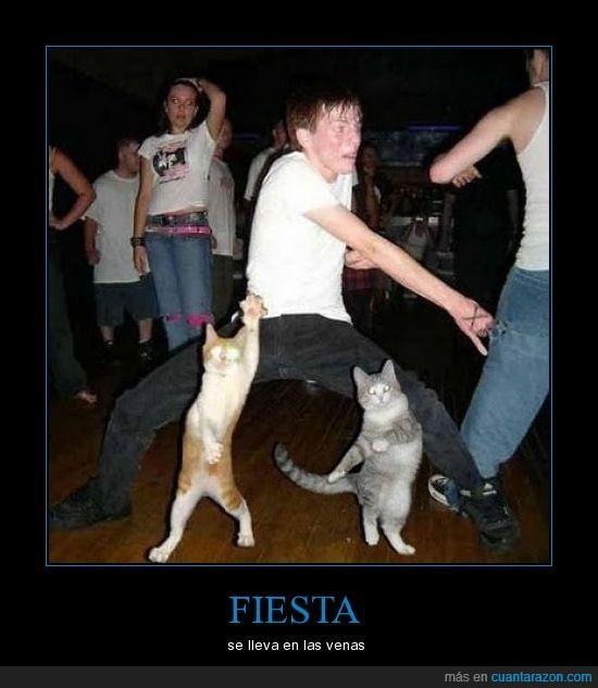 baile,fiesta,gatos