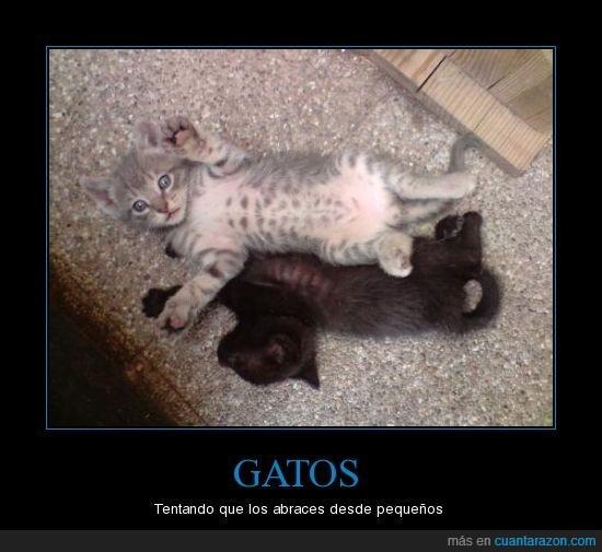 abrazar,gatos,pequeños